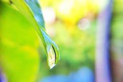 Gota da água na folha Imagens de Stock