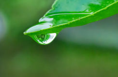 Gota da água na folha Fotografia de Stock Royalty Free