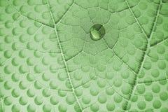 Gota da água na folha com furos de vidro Imagens de Stock Royalty Free