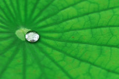 Gota da água na folha dos lótus Fotos de Stock Royalty Free