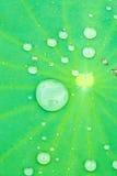 Gota da água na folha dos lótus Fotos de Stock