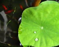 A gota da água na folha verde Imagem de Stock