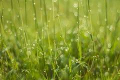 Gota da água na grama verde Imagem de Stock