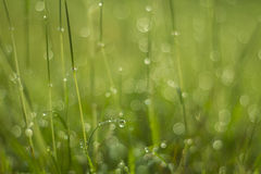 Gota da água na grama verde Fotografia de Stock