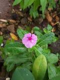 Gota da água nas flores fotografia de stock royalty free
