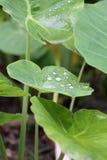 Gota da água no verde Foto de Stock
