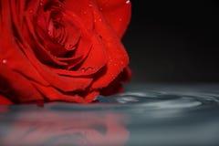Gota da agua potável com rosa do vermelho foto de stock royalty free
