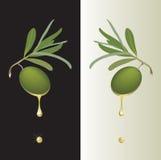 Gota da azeitona verde Imagens de Stock Royalty Free