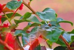 Gota da chuva do Arizona Imagens de Stock