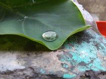 Gota da chuva na folha Fotos de Stock Royalty Free