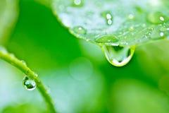Gota da chuva na folha da planta imagem de stock