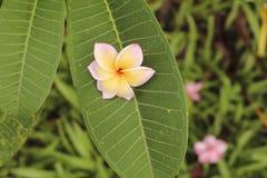 Gota da flor Foto de Stock Royalty Free