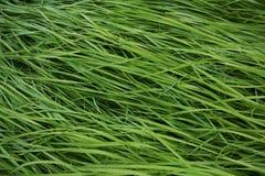 Gota da grama e da chuva imagem de stock royalty free
