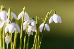 Gota da neve na grama na luz do dia Imagens de Stock Royalty Free