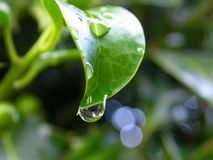 Gota de água Imagens de Stock