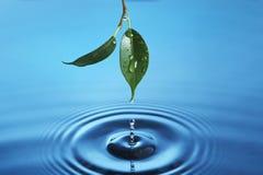 Gota de água Imagem de Stock