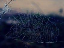 Gota de água em Spiderweb em um amanhecer do inverno Fotos de Stock