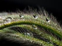 Gota de água na grama fotos de stock