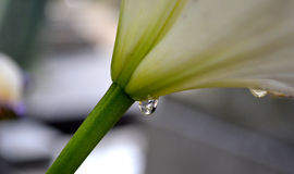 Gota de agua Royaltyfria Bilder