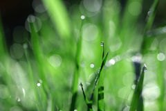 Gota de agua en la lámina de la hierba fotos de archivo libres de regalías
