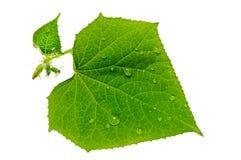 Gota de agua en las hojas verdes. Fotos de archivo libres de regalías