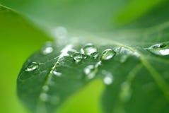 Gota de água na licença Imagem de Stock