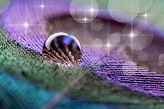 Gota de água na pena do pavão Imagens de Stock Royalty Free