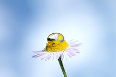 Gota de la flor y del agua Imagen de archivo libre de regalías
