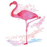 Gota de la sombra con el flamenco ilustración del vector