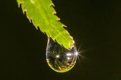 Gota de lluvia en la hoja Fotos de archivo libres de regalías