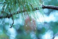 Gota de lluvia en las hojas después de llover Imágenes de archivo libres de regalías