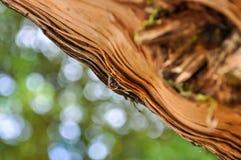 Gota de lluvia en un tronco de árbol Fotografía de archivo libre de regalías