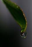 Gota de lluvia en una hoja Fotos de archivo libres de regalías