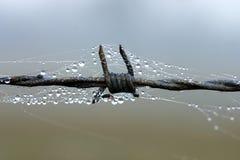 Gota de rocío en el alambre de púas Foto de archivo