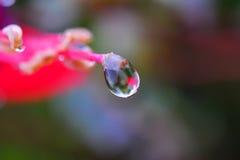 Gota de rocío en la flor Imágenes de archivo libres de regalías