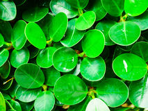 Gota de rocío en la hoja verde foto de archivo