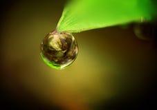 Gota de rocío que cuelga en una hoja. Imagen de archivo libre de regalías