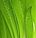 Gota de rocío en las hojas Fotos de archivo