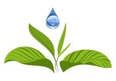 Gota del agua con las hojas verdes Concepto de la ecología Fotografía de archivo libre de regalías