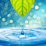 Gota del agua de la hoja verde Imagen de archivo libre de regalías