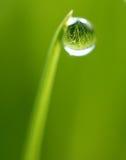Gota del agua en la extremidad de la hierba Imagen de archivo libre de regalías