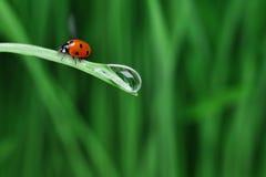 Gota del agua en la hierba imagen de archivo