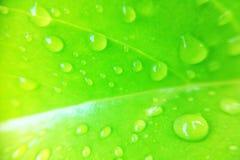 Gota del agua en la hoja Foto de archivo libre de regalías