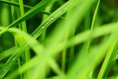 Gota del agua en la hoja de la hierba verde Imagenes de archivo