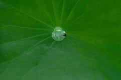 Gota del agua en la hoja del loto Foto de archivo