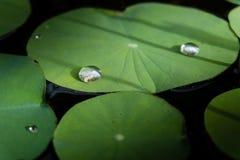 Gota del agua en la hoja del loto Imágenes de archivo libres de regalías