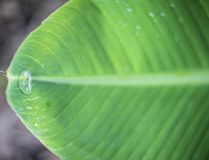 Gota del agua en la hoja verde Imágenes de archivo libres de regalías