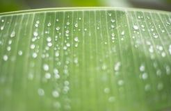 Gota del agua en la hoja verde Fotografía de archivo