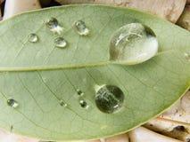 Gota del agua en la hoja verde Fotografía de archivo libre de regalías