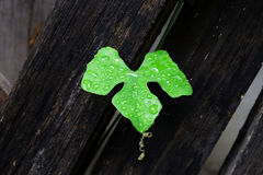 Gota del agua en la hoja verde imagen de archivo libre de regalías